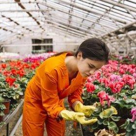 Почему цветы стоят дорого?